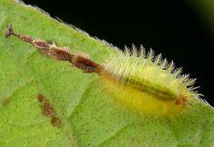 第27回 生きているからこそ輝く昆虫 | ナショナル ジオグラフィック(NATIONAL GEOGRAPHIC) 日本版公式サイト