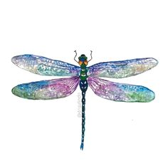 20 new Ideas painting inspiration nature Dragonfly Painting, Dragonfly Wall Art, Dragonfly Tattoo Design, Dragonfly Tatoos, Dragonfly Meaning, Tattoo Designs, Butterfly Watercolor, Watercolor Animals, Watercolor Cards
