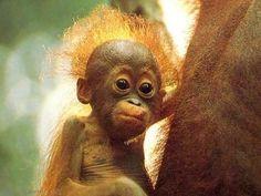 Les 21 meilleures images de bébé singe | Bébé singe, Singe et Bébés animaux