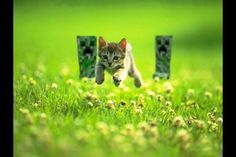 Run Kitty run!!!!