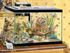 "Who says puzzles can't be hilarious?! These kitties see a snack! Finished size is 18"" x 24"" - Artist: Lori Schory. A SunsOut product. 300 Piece Puzzles, Puzzle Shop, Fish Tank, Hilarious, Kitty, Canning, Artist, Little Kitty, Aquarium"
