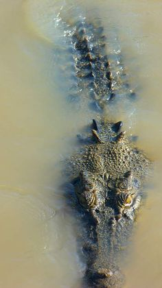 Crocodile Australie - Kakadu Australie - GEO communauté photo