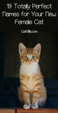 top 35 cat names that mean survivor  cute cat names cat