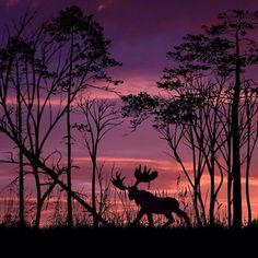 Capturing The Shadows By Dominic Liam More at Box Art, Cool Pictures, Moose Art, Sunset, Amazing, Artwork, Artist, Animals, Outdoor