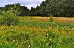 Heide bij Alphen #2