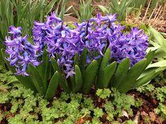 Scenes from Tim's Ohio Garden in Spring   Fine Gardening