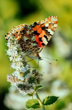 f612415f2 Insect Photos, Beautiful Butterflies, God's Grace, Lady Bugs, Crabs,  Taxidermy