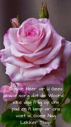 Good Night Blessings, Goeie Nag, Inspirational Verses, Prayer Quotes, Afrikaans, Rose, Yard, Diy, Good Night Wishes