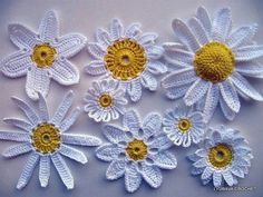 Crocheted Daisys