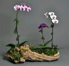 Best Orchid Arrangements With Succulents And Driftwood - Decomagz - Orchideen Orchid Terrarium, Orchid Planters, Orchids Garden, Succulents Garden, Planting Flowers, Terrarium Ideas, Patio Planters, Flowers Garden, Hanging Planters