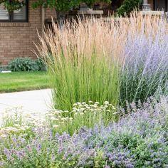 Pool Plants, Dry Plants, Raised Garden Beds Cinder Blocks, Feather Reed Grass, American Meadows, Tropical Garden Design, Starting A Vegetable Garden, Florida Gardening, Ornamental Grasses