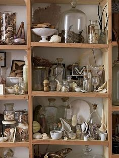 cabinet of curiosities awesome Natural History - Modern