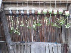 onyhakertek Garden, Plants, Industrial, Business, Decor, Red Peppers, Garten, Decoration, Lawn And Garden