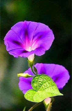 Blossom Garden - Paradise of Flowers! Flowers Nature, Exotic Flowers, Tropical Flowers, Amazing Flowers, Purple Flowers, Beautiful Flowers, Blossom Garden, Blossom Flower, Flower Garden Plans