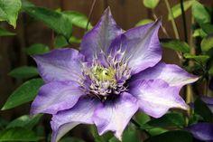 https://flic.kr/p/qM5yEL   Flower   Lavant 2013