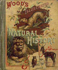 Wood's Illustrated Natural History...Rev. J.G.Wood 1882