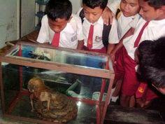 Φίδι με ανθρώπινο κεφάλι στην Μαλαισία - Νεα, Γενικες πληροφοριες.