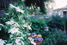 Zeiss Ikon Contaflex IV photo.  http://whatisafilmcamera.com/zeiss-ikon-contaflex-iv/   Even a Chicago backyard can be beautiful, seen through the eyes of a German-American and his near 60 year old German camera.