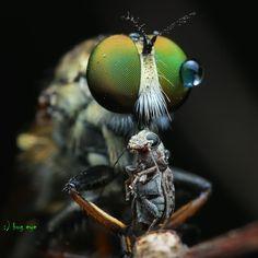 dinner ! by bug eye :) on 500px