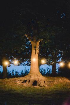 Baum beleuchtet
