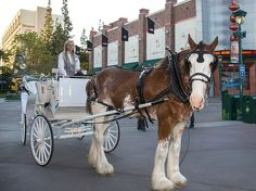 Romantic Carriage Rides for Valentine's Day in the Downtown Disney District at the Disneyland Resort
