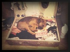Border Terrier Puppy, Terrier Dogs, Doggies, Dogs And Puppies, Little Brown, Baileys, Puppys, Four Legged, Make Me Smile