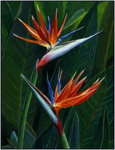 Bird of Paradise Flower, painting by artist Paul Wolber