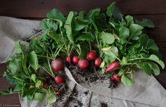 Eigene Ernte Fruit, Vegetables, Food, Garden Plants, Harvest, Fruit And Veg, Couple, Love, Flowers