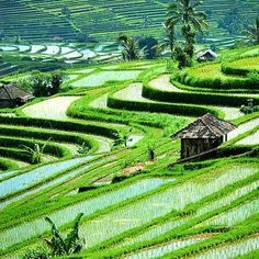 Bali island, Indonesia famous as stunning white sand beaches and great rice terraces. Jatiluwih Rice Terrace Bali and Ubud Tegalalang Rice Terrace are best one Denpasar, Places Around The World, Travel Around The World, Places To Travel, Places To See, Travel Destinations, Holiday Destinations, Voyage Bali, Bali Holidays