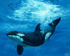 one drop by odontocete on DeviantArt-- one drop Beautiful Sea Creatures, Animals Beautiful, Animals And Pets, Cute Animals, Ocean Creatures, Killer Whales, Ocean Life, Marine Life, Under The Sea