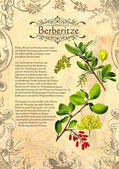 Berberitze http://www.kraeuter-verzeichnis.de/ > Berberis vulgaris-  Ruostehappomarja