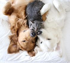 かわいさ摂取量越え。犬×猫×犬のサンドイッチ寝がかわいすぎるんじゃ!