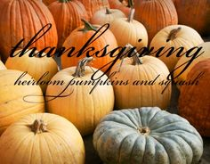 8 Heirloom Pumpkins and Heirloom Squash - Thanksgiving Squash - Halloween Jack-o-Lanterns - The Daily Green