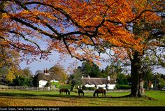 Swan Green, New Forest, Hampshire, England. Man Photography, Landscape Photography, New Forest England, Uk Landscapes, Manor Homes, English Architecture, Hampshire England, English Castles, Early Autumn