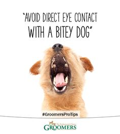 Handle a Bitey Dog