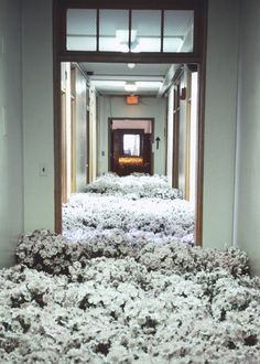 pikeys:  28,000 potted flowers were scattered around a mental health center before it was demolished; it was installed for reflection and rememberence of how the center had cured many mental illnesses