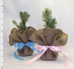 Burlap trees make excellent tree wedding favors or table decorations. This burlap tree consists of the half-bagged tree seedling, planting instructions and a burlap circle, and ribbon. Baby Shower Favors, Shower Gifts, Tree Seedlings, Custom Tags, Birthday Party Favors, Wedding Favors, Diy Beauty, Beauty Hacks, Manualidades