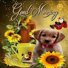 Good Morning Wishes Gif, Good Morning Thursday, Good Morning Msg, Good Morning Flowers, Good Morning Greetings, Good Afternoon, Good Morning Quotes, Morning Gif, Good Morning Animation