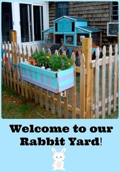 Tour our Angora rabbit's outdoor home