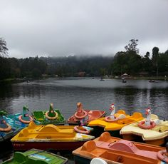 Kodaikanal Lake, a man-made lake at Kodaikanal Hill Station in Tamilnadu India. Spread over 60 acres this star shaped lake was built in 1863 and is surrounded by lush green hills of the Palani Hills range.    Apart from row boats and pedal boats which can be hired at the lake, tourists can also hire bicycles and horses for rides around the lake. The 5 km beautiful path around the lake is used by tourists for horse ride, bicycling and also for a cool walk.