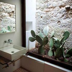 cactus planter in the bathroom
