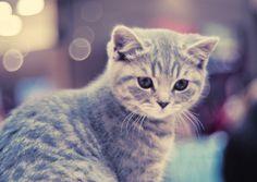 Kitten with bokeh