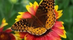 Beautiful Butterfly: Find Beautifull butterfly images with HD quality and find more details of generally speaks about god's creations (birds,animals,ect. Most Beautiful Birds, Beautiful Butterflies, Cartoon Birds, Butterfly Images, Free Photographs, Bird Theme, Widescreen Wallpaper, Wallpapers, Bird Crafts