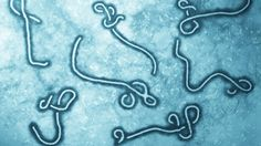 Doctors Want More #Ebola Cases, Here's Why