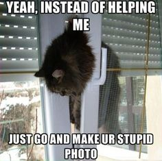 Hilarious images of the day, 33 images. Funny Cat Stuck Between Window