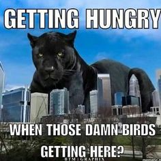 Keep Pounding! Panthers Football Team, Panthers Memes, Panther Nation, Afc Championship, Carolina Panthers, North Carolina, Hilarious, Cricket, Sports