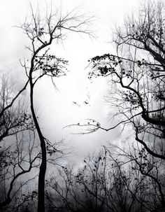 For some reason I find this incredible!!!! I see things in the trees all the time. But this is just way cool!