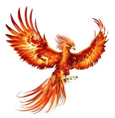 My favorite mythical bird, the Phoenix - Pet care is both enjoyable business. But it is an effort that requires as much responsibility. We must provide them with everything they need to maintain their lives in a healthy way in all respects and implement a care program accordingly. They, like human beings, need both physical and moral care and love. It is necessary to devote special time to these. If we assume this responsibility, we must act with all the necessary things for their healthy devel