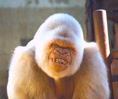 Gorillap