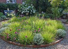 Green Garden, Garden Plants, Native Plants, Permaculture, Horticulture, Garden Design, Wildlife, Gardening, Ideas